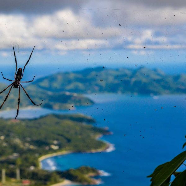 Seychelles - Spider and island view